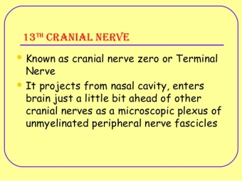 13th cranial nerve....