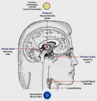 trinity in brain