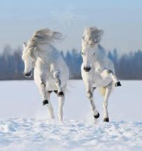 white-horses-two